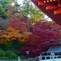 写真: 高幡不動の紅葉