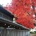 Photos: 近所を散歩