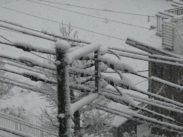 写真: 雪2018