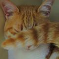 写真: Cat  Nap