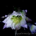 京都植物園-0896