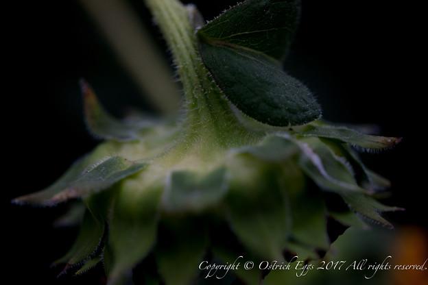 photo-2945