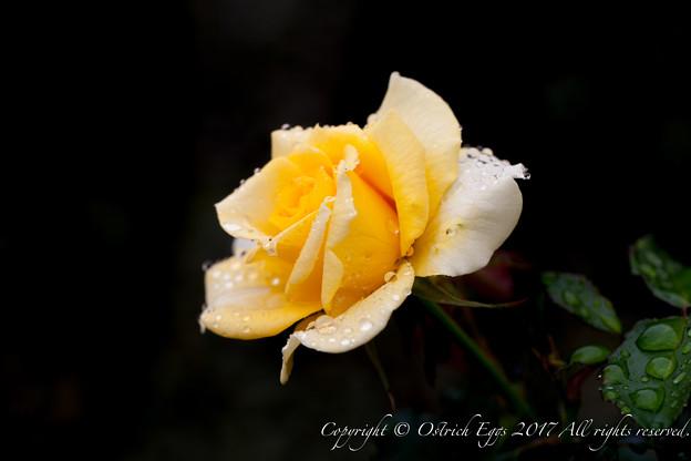 Photos: Rose-3493