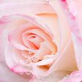Photos: Rose-3637