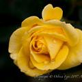 Photos: Rose-3683