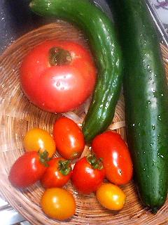 Summer Dream 37- 菜園で採れた新鮮野菜