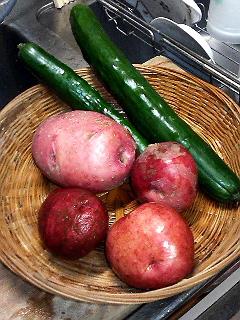 Summer Dream 34- 菜園で採れた新鮮野菜