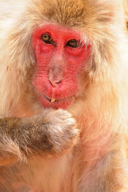 Photos: お猿さん