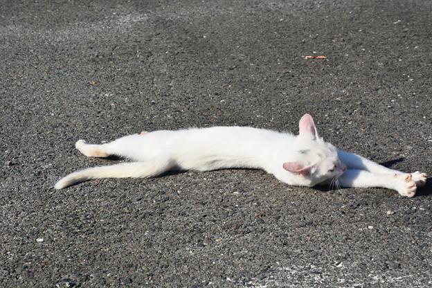 写真: 仔猫