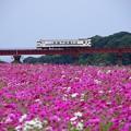 写真: JR指宿枕崎線