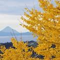 写真: 晩秋のさつま富士