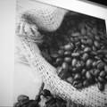 コーヒー豆の表現