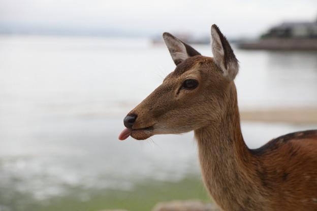 鹿に馬鹿にされた