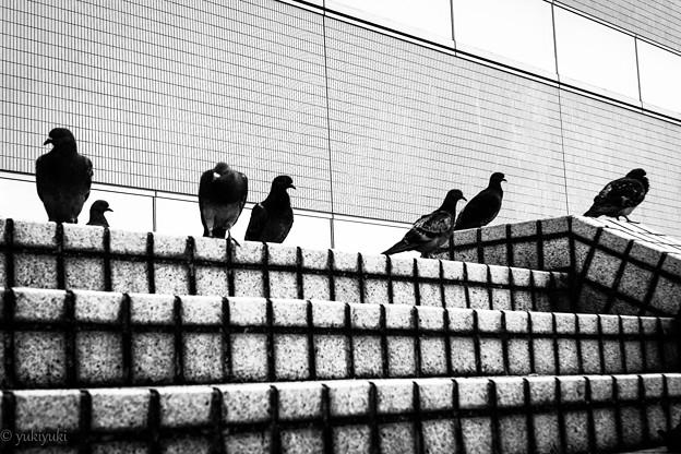 鳥に人気の私