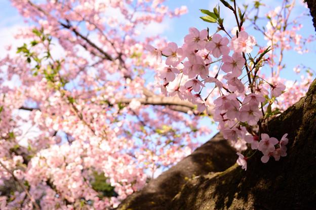 光のどけき春の陽に