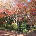 171207-5私の通っている公園の紅葉