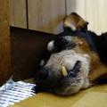 写真: 良く寝るやっちゃ