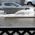 Photos: 豪雨のあと