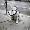 写真: サンフランシスコの犬
