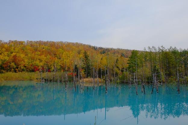 写真: 青い池