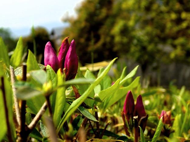出番を持つ,開花前の緊張。