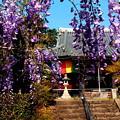 藤と寺院・1