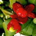 街角・気になる花、ポニョのような雌花です。