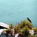 海岸で野鳥(ササゴイ)を撮影。1