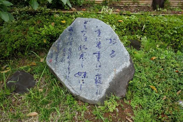 武田川コスモス・菜の花ロード@木更津P1000348