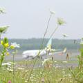 写真: Airfield (1)
