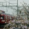桜と鮮魚列車