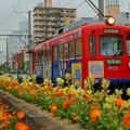 Photos: 阪堺電気軌道 阪堺線