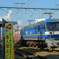 Photos: 77レ【EF210-307牽引】