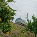 Photos: EF66 133【配1392レ】