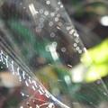 写真: 真珠の首飾り 3