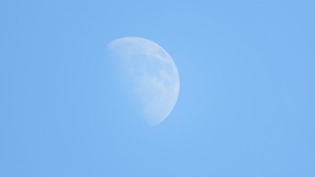 写真: 昼間の月