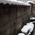 Photos: まだまだ残る雪 2