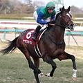 写真: トーセンジョーダン1_2011AJCC