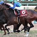 写真: トーセンジョーダン2_2011AJCC