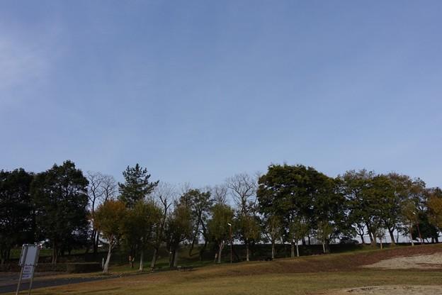 写真: DSC02516