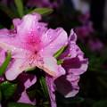 写真: 雨の中で