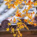 2017 大興善寺の紅葉3