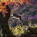 2017 高崎山の紅葉と猿5