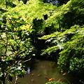 写真: 放生池