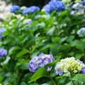 写真: 《沿線花だより》