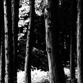 檜モデル林