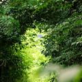 「楽園への道」的な