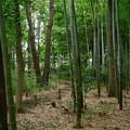 ハイブリッド緑地