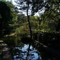 写真: やがて至る三宝寺池