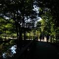 写真: 木陰の涼しさ